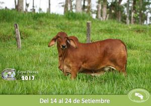 Expo Pococí 2017 11-09-2017